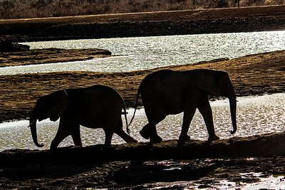 Oct 2014 - Madikwe Game Reserve, South Africa